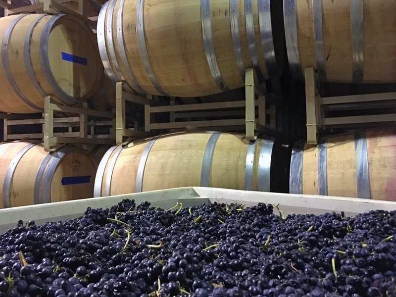 Washington State Exceeds 1,000 Wineries