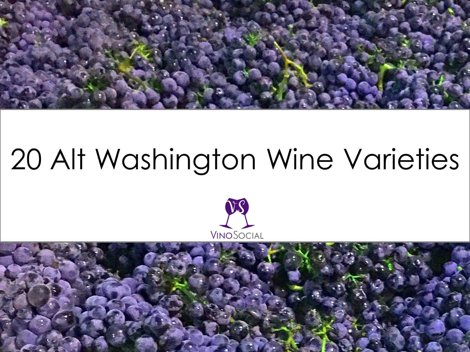 20 Fun Red Washington Wine Varieties You Need to Try