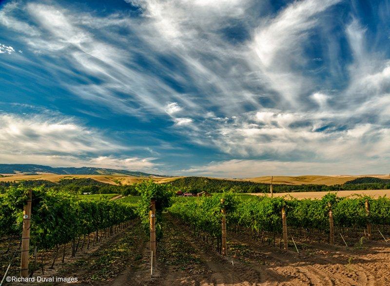 Celebrate Walla Walla Valley Wine Month